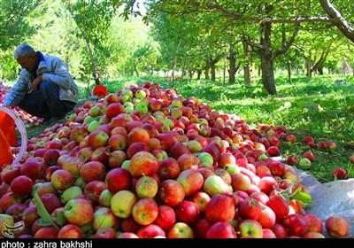صادرات محصولات کشاورزی و غیرنفتی در سال 1400 مورد حمایت قرار میگیرد