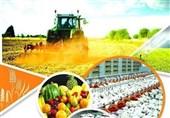 تجدید نظر در کشت محصولات کمآب و پرسود برای کشاورزان زنجانی