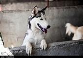 آموزش سگها برای شناسایی بیماران کرونایی!