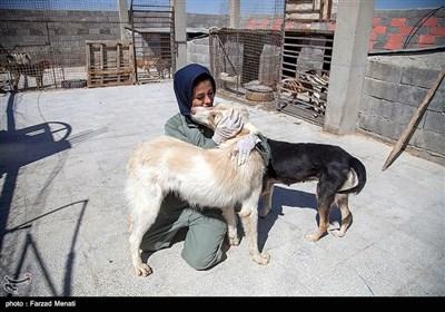 بمناسبت روز دامپزشکی-مرکز نگهدار ی سگهای خیابانی در کرمانشاه