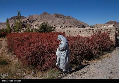 سرخ شدن زمین در فصل پاییز و ترکیب آن با آسمان صاف و آبی این منطقه اخیرا آن را به یکی از مراکز اصلی گردشگری در ایران تبدیل کرده است