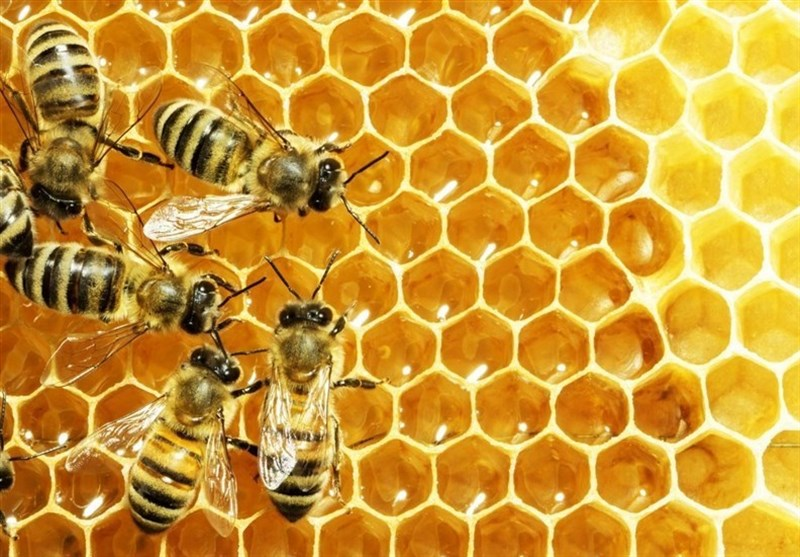 تولید 1800 تن عسل در کردستان؛ مسئولان توسعه صنعت پرورش زنبور عسل را فراهم کنند