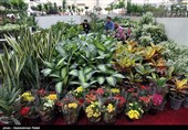 درآمد 15 میلیون تومانی با پرورش گیاهان زینتی؛ همت بانوی جوان اهل قیروکارزین در کارآفرینی