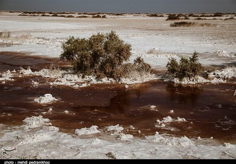 گرد سفید نمک بر تن هورالعظیم + تصاویر