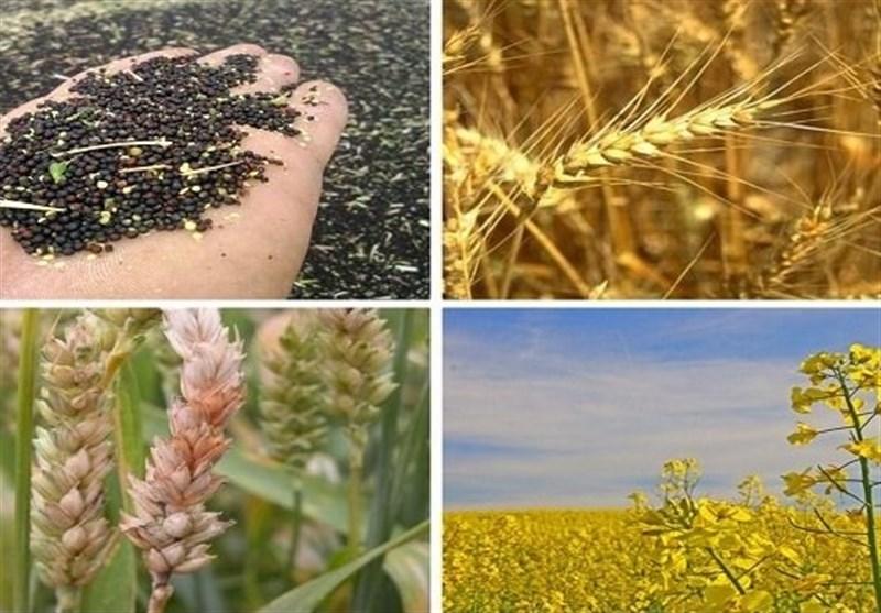 جزئیات خرید تضمینی 25 قلم محصول زراعی در سال 99-98/ گندم 2200 تومان مصوب شد + جدول