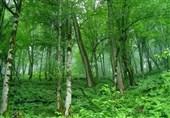 درختان باغشهر تاریخی نطنز در معرض خطر نابودی/مسئولان در این زمینه چه اقداماتی انجام دادند؟