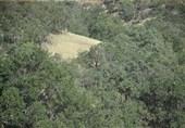 جنگلهای بلوط استان چهارمحال و بختیاری در معرض نابودی هستند