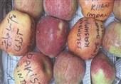 کشمیری سیب کشمیریوں کی زبان بن گئے