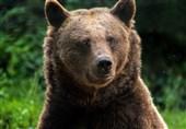عامل کشتار خرس مشگینشهر با اسلحه قاچاق بازداشت شد