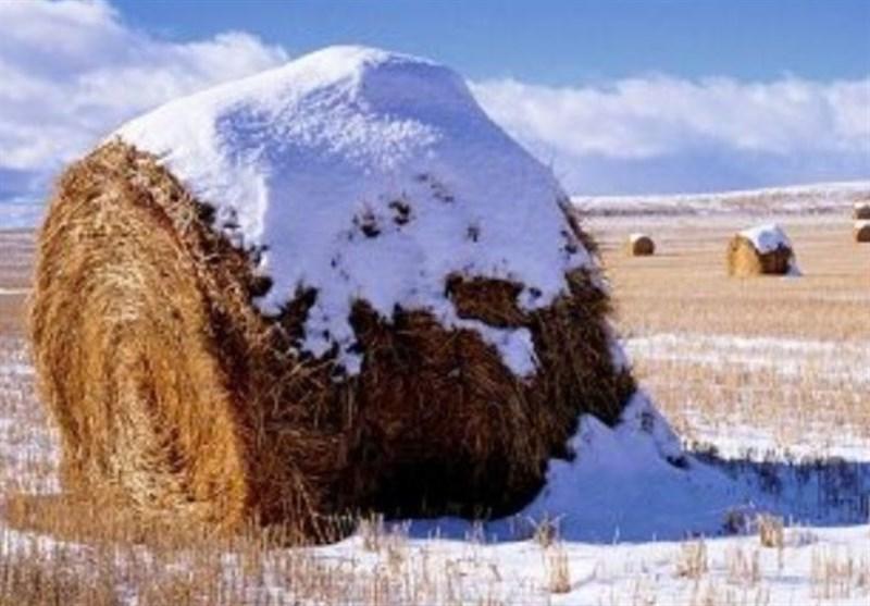 اطلاعیه هواشناسی برای انجام عملیات کشت پاییزه قبل از یخبندان