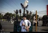 پیاده روی جاماندگان اربعین حسینی(ع) در تهران