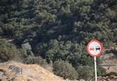 ادامه پروژه چهار خطه «یاسوج ـ سیسخت» 925 درخت چند صد ساله بلوط را نابود میکند+تصاویر