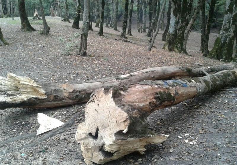 10 دلیل برای اینکه از درختان محافظت کنید
