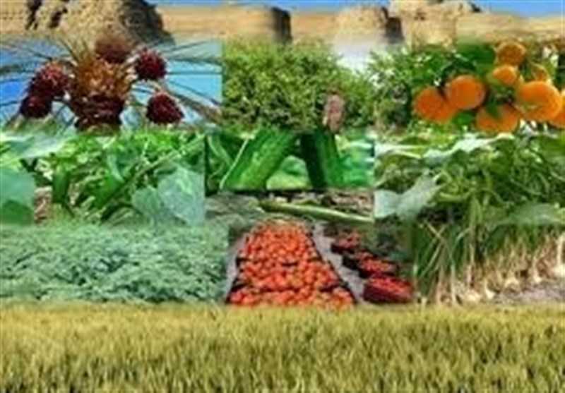 ظرفیتهای غیرفعال حوزه کشاورزی با مشارکت تعاونیهای تولیدی فعال شوند