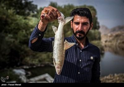 تلف شدن هزاران قطعه ماهی در رودخانه قره سو-کرمانشاه