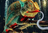 Fast-Acting Robots Inspired by Chameleon's Tongue Strike