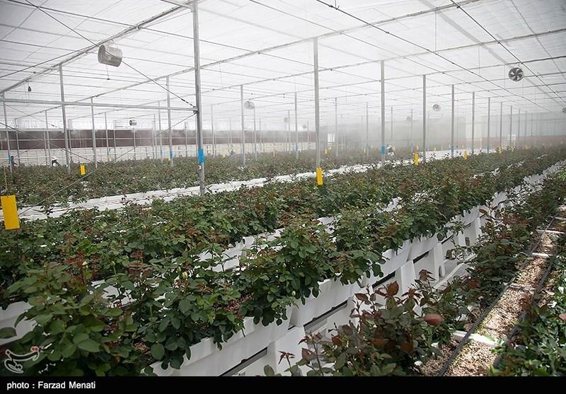 تهران| ایجاد شهرک گلخانهای در پیشوا گامی در مسیر توسعه؛ 220 هکتار شهرک گلخانهای ایجاد میشود