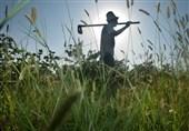 هشدار جدی 3 سازمان جهانی درباره کمبود مواد غذایی با گسترش کرونا