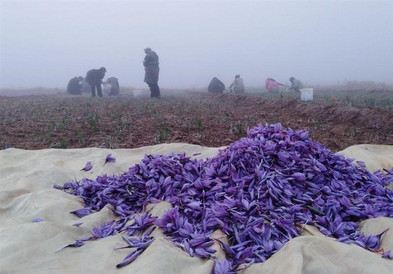 زعفران استان خراسان جنوبی خرید توافقی میشود