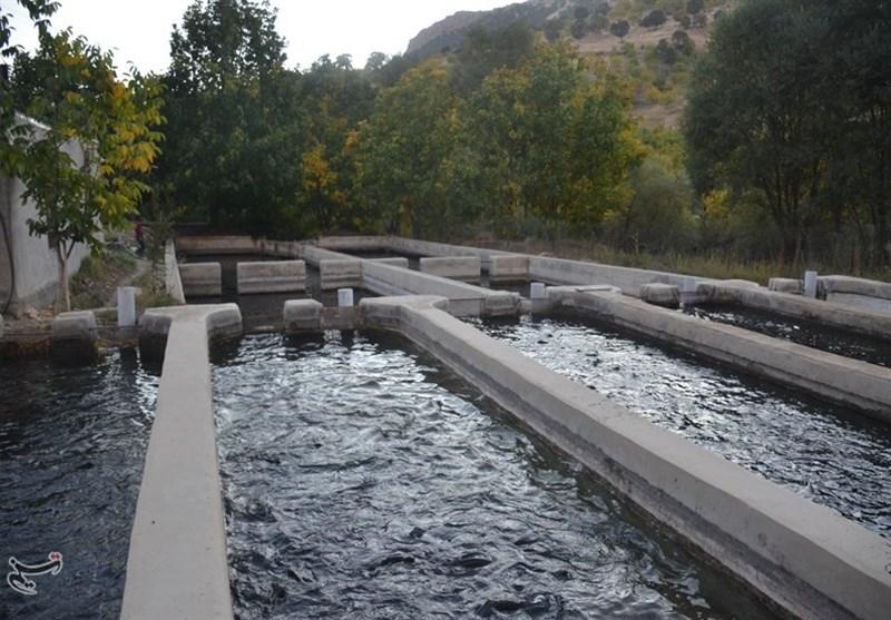 ظرفیت تولید بیش از 1000 تن ماهی خاویاری در لرستان ایجاد شد