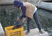 طرح پرورش ماهی در حاشیه رودخانههایدائمی و پرآب آذربایجان شرقی اجرا میشود