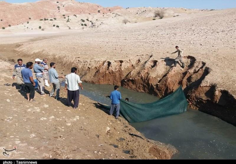 جلوگیری از تلف شدن ماهیهایگرفتار در حوضچه پشت سد گتوند
