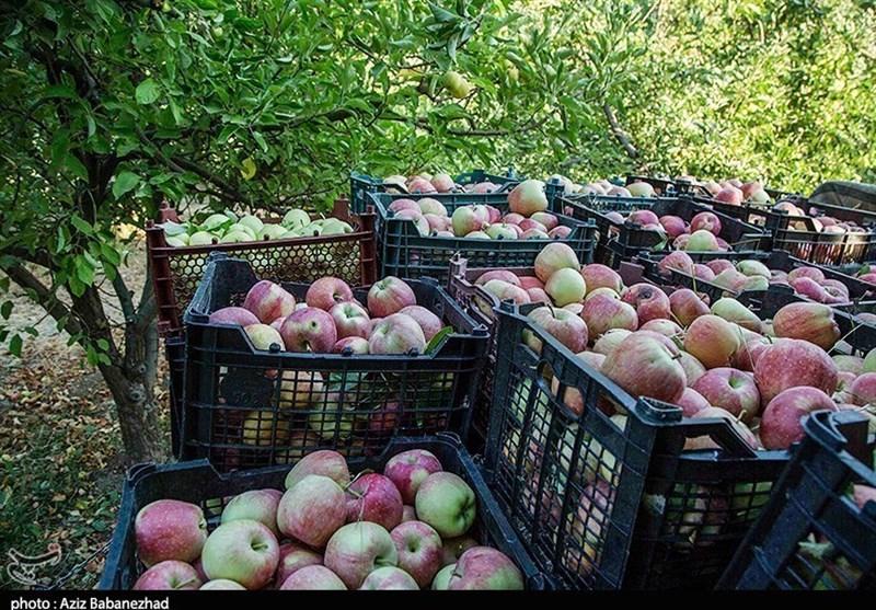 شهرستان دماوند سرآمد استان تهران در تولید محصولات کشاورزی است