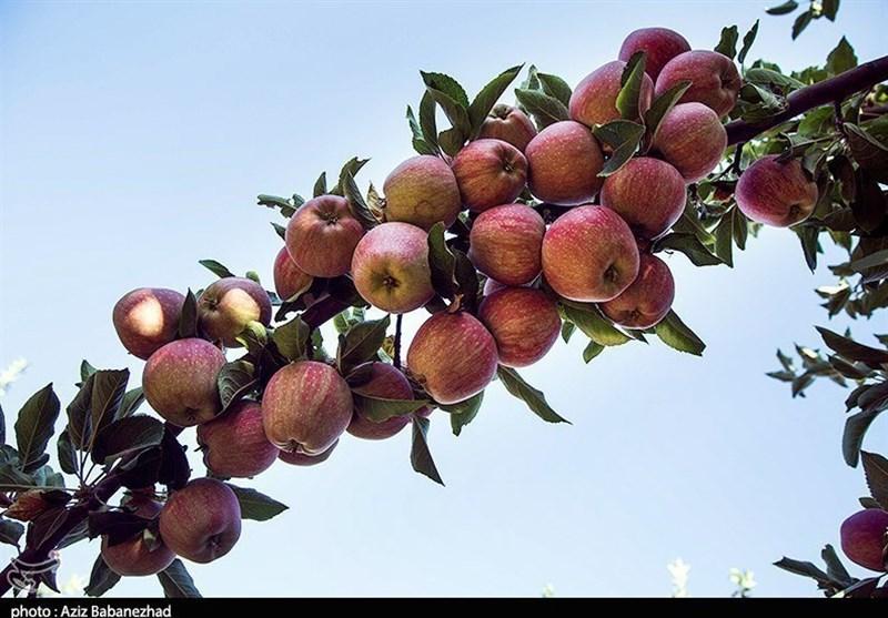 باغهای سیبی که در بروجرد «ویلا» شد