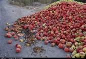 خرید حمایتی سیب درجه سه به قیمت هر کیلو 800 تومان آغاز شد