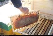 حمایت ویژه از صنعت زنبورداری گیلان؛ تولید عسل در استان 10 درصد افزایش مییابد