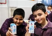 215 میلیون پاکت شیر استرلیزه تا پایان سال در مدارس توزیع میشود