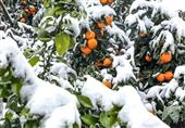 هواشناسی|توصیههای مهم هواشناسی به کشاورزان/ هوا 10 درجه سردتر میشود