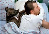 آمریکا| 34 درصد خانوادههای نیویورکی نگهداری از سگ را به فرزند ترجیح میدهند!
