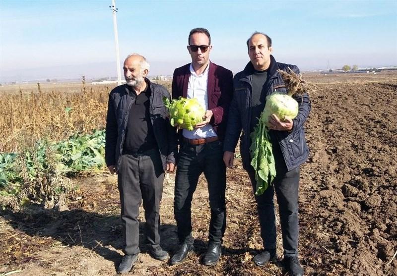 تولید سنگینترین کلم دنیا در روستای شهریور اردبیل + فیلم