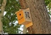 اصفهان| مأمنی برای آرامش پرندگان؛ اینجا حال پرندهها خوب است + فیلم