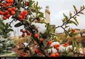 هواشناسی ایران 99/8/16|آغاز بارش برف و باران در 10 استان/ کاهش 7 درجهای دما در برخی مناطق