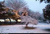هواشناسی|بارش برف و باران تا روز شنبه ادامه دارد
