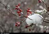 هواشناسی|پیش بینی برف و باران 2 روزه در برخی استانها/ هشدار کولاک برف و تندبادهای لحظهای