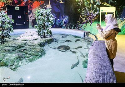 در این آکواریوم بیش از ۳۵۰ گونه از زیباترین و نادرترین ماهیها از پنج قاره جهان به نمایش گذاشته شده است.آکواریوم ایران در منطقه آزاد انزلی