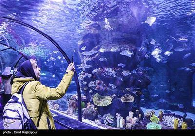 در این آکواریوم بیش از ۳۵۰ گونه از زیباترین و نادرترین ماهیها از پنج قاره جهان به نمایش گذاشته شده است.