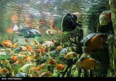 بزرگترین آکواریوم ایران در منطقه آزاد انزلی