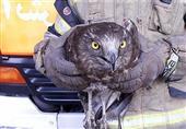 تهران| ورود پرنده شکاری به مغازه + عکس