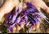وجه تضمین اضافی قرارداد آتی پوشال معمولی زعفران از فردا کاهش مییابد