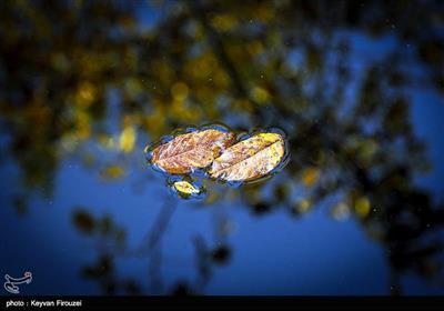 برگ های خزان زده - سنندج