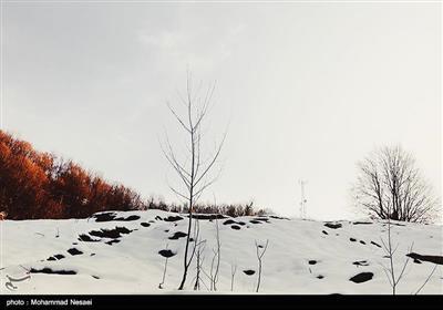 طبیعت پاییزی - گلستان