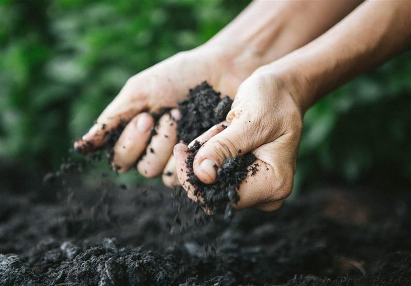 World Soil Day: Soil A Non-Renewable Resource