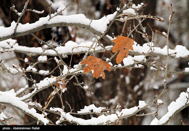 هواشناسی ایران 98/09/25  آغاز باران و برف شدید در سراسر کشور از امروز