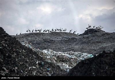 بازدید سفیر اتریش در ایران از مرکز بازیافت زباله - کرمانشاه