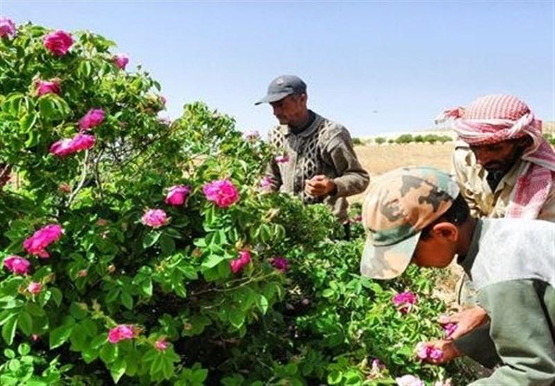 سوریا..الوردة الشامیة على لائحة التراث الإنسانی بالیونسکو