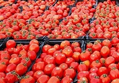 قیمت گوجه فرنگی رنگ باخت/کاهش ۴۰ درصدی در میادین میوه و تره بار